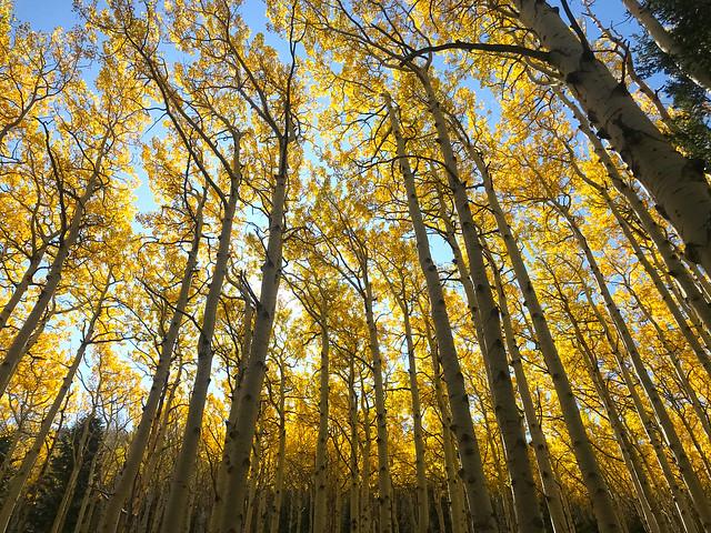 Fall in Lockett Meadow