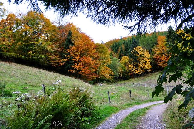 Couleurs d'automne .... de la forêt alsacienne