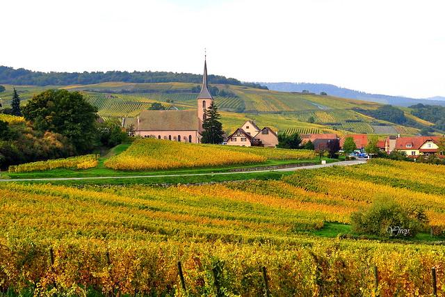 Couleurs d'automne .... du vignoble alsacien