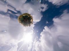 Upside Down Jellyfish from Below