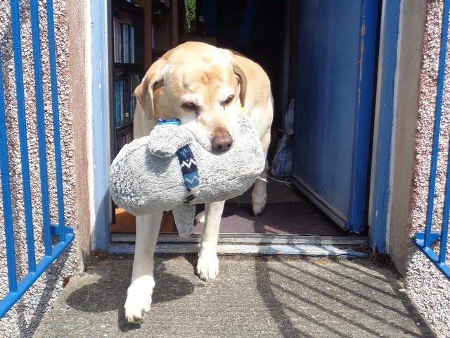 Dakota with toy