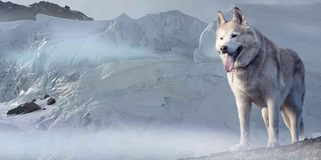 la-reproduction-espèces-animales-au-Groenland-compromise