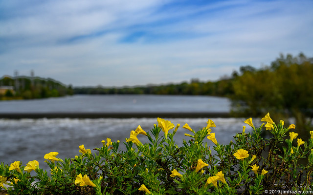 Flowers on the Fox River