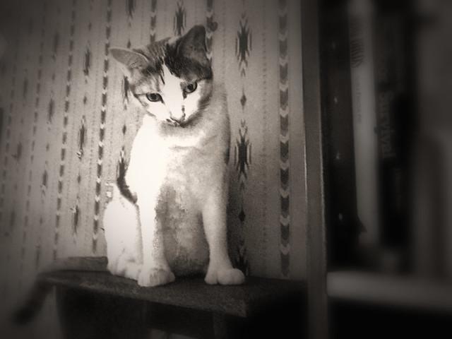 Tally on Her Shelf (sepia)
