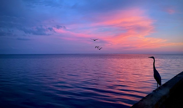 Birds of Tampa Bay in a Pink Sunset