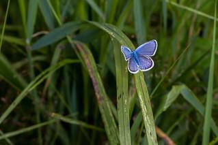 Blue Beauty - _TNY_2048
