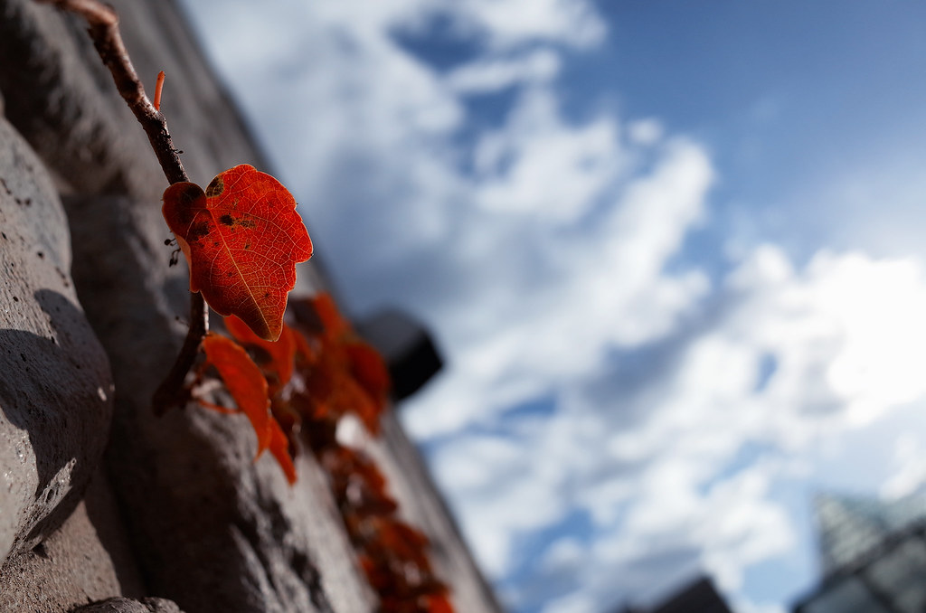 A flash of autumn colour