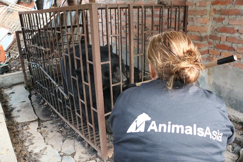 Animals Asia Vet Nurse Sarah Donald meets Tuan