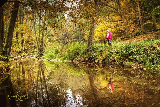 Herbstzauber ... an der Ilz im Bayrischen Wald.