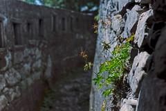 Schützengraben / Trench