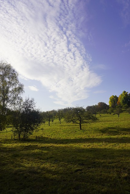 Autumn with apples, clouds and cattle