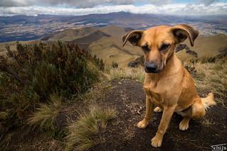Home dog Secret Garden, Cotopaxi, Ecuador