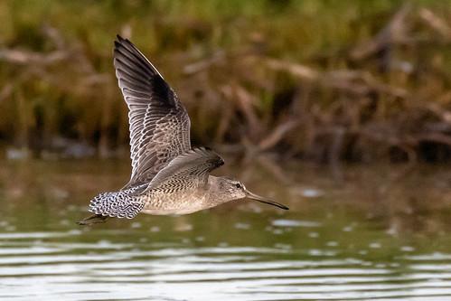outdoor seaside dennis adair shore sea sky water nature wildlife 7dm2 7d ii ef100400mm ocean canon florida bird flight