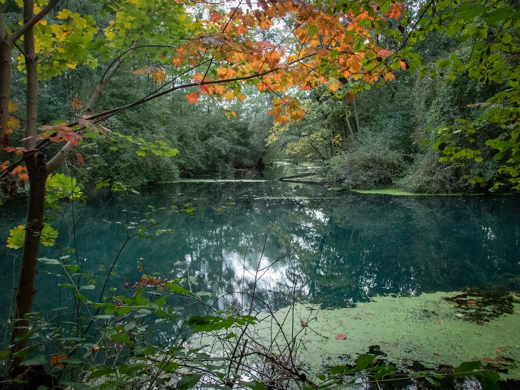 Autumn is coming... 48907308672_89e9682e5f_b