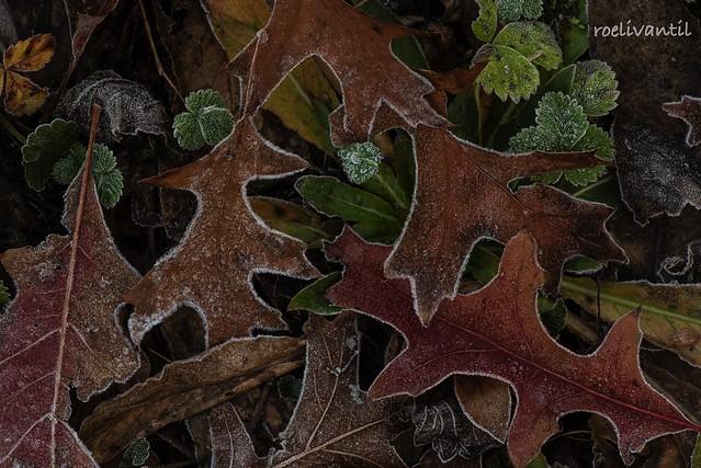 Blaadjes / Leaves