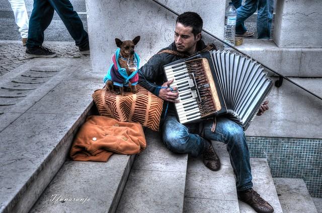 Perro trabajador (Lisboa)