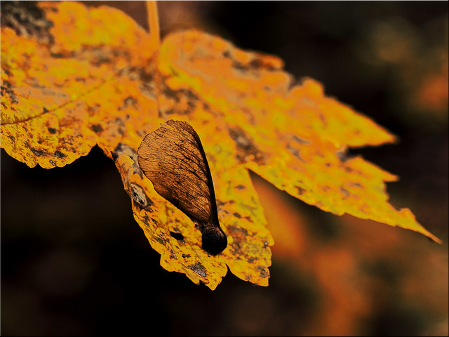 Autumn - the old goes and the new comes