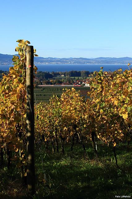 Der Wein vom Bodensee
