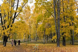 Autumnal, golden colours