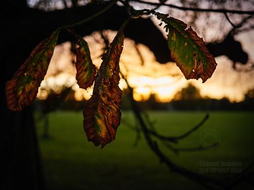 Rotting Autumnal Leaves