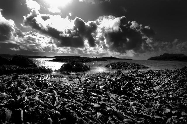 Seaweed Mono