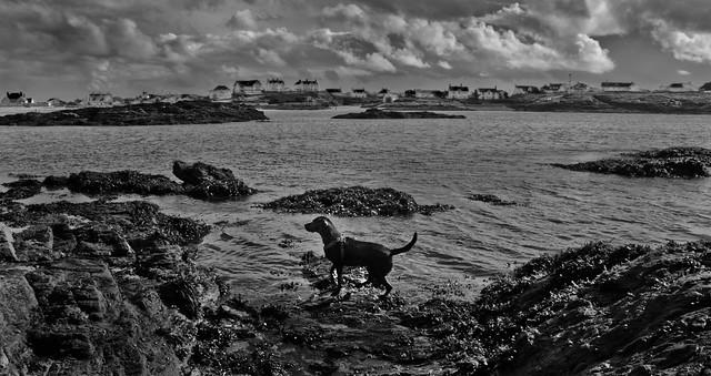 Izzy Trearddur Bay Mono