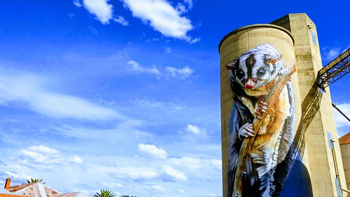 sugarglider rochester victoria siloart sky blue rural silo townmural painting art
