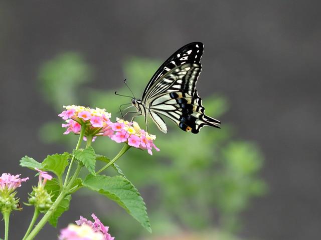 OMD EM1 10.16.2019 butterfly 1