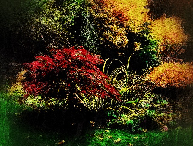 Autumn  garden colours