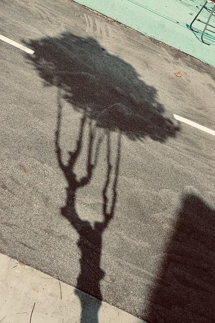 289/365: lone tree