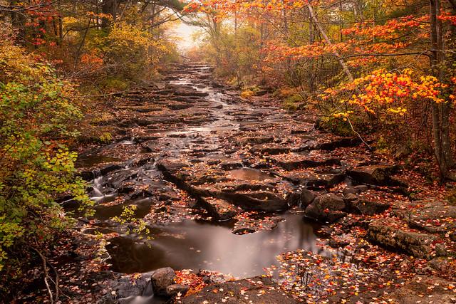 Duck Brook in Acadia National Park