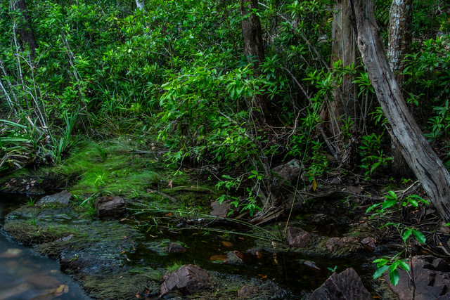 Monsoonforest