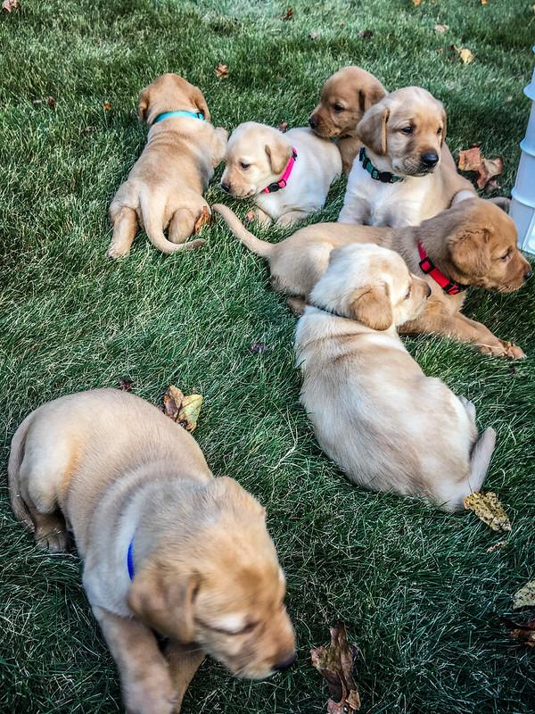Daisy's Puppies