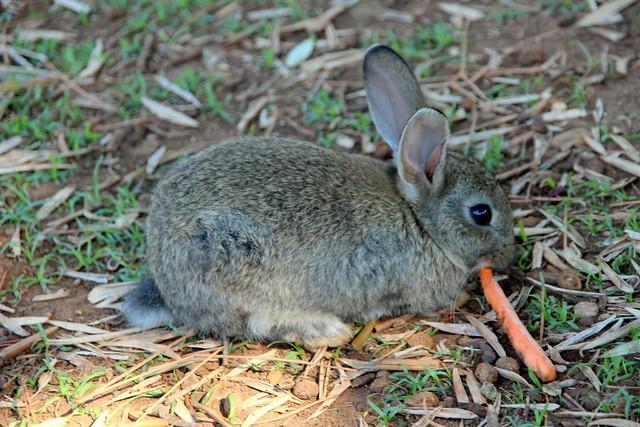 The little cute bunny