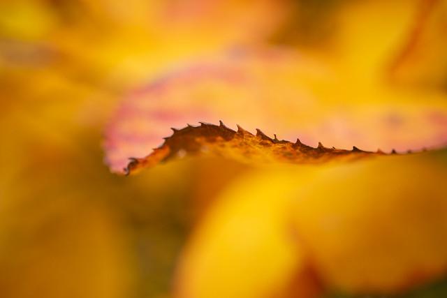 Soft Autumn
