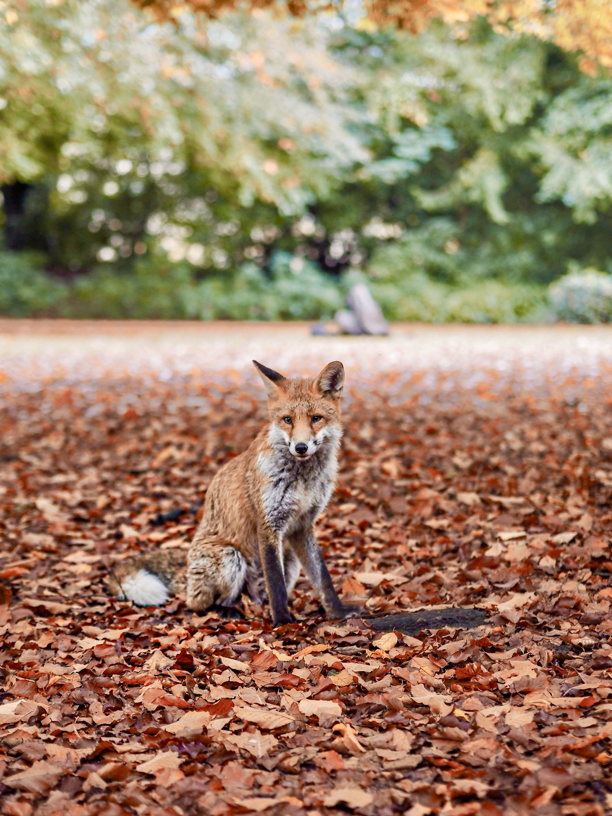 baby fox cub autumn aesthetic