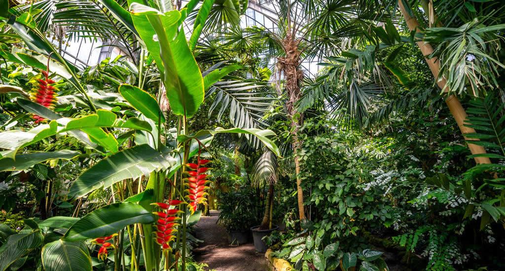 Botanische tuin in Heidelberg | Mooistestedentrips.nl