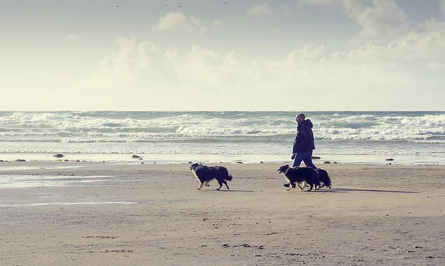 Beach Friendly Dogs