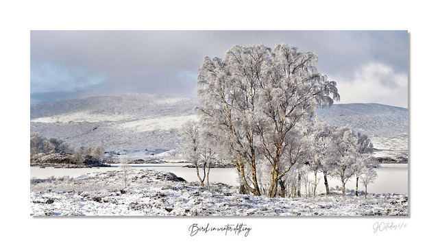silver birch winter clothing framed