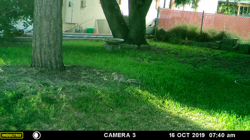 squirrel-20191016-150