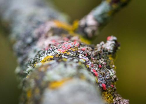 Lichen invasion