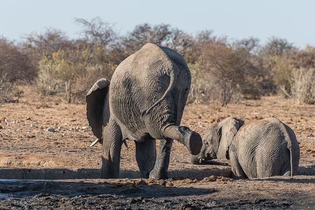 lazy elefants