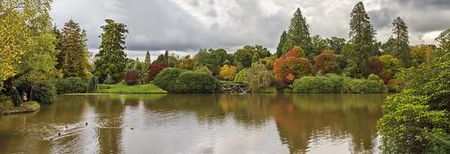 Autumn Arriving at Sheffield Park