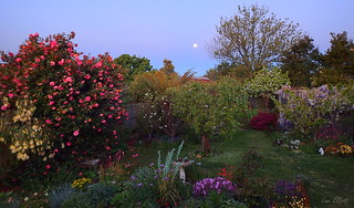 Our Garden by Moonlight