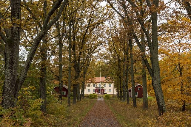 Autumn Allée