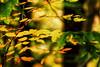 Fall. And leaves. #Fall #color #leaves #macro 🍁🍂 #catskills #newyork #outside #explore #hiking #adventure #canon #realcamera #rebelxs