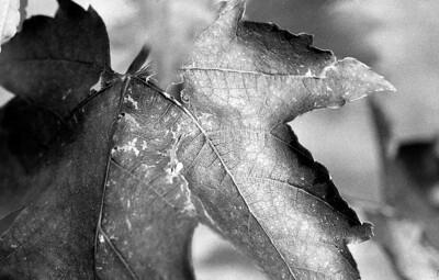 Autumn's Demise {Explored, thank you}
