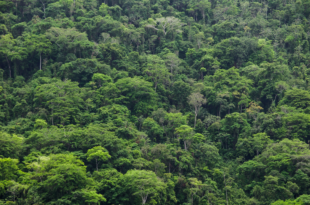 Lush forest in Tayrona National Natural Park