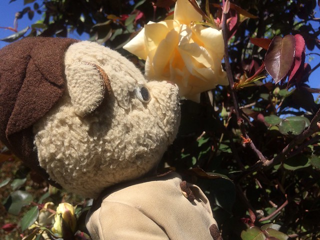 Paddington and Scout Stop to Smell the Roses 2.