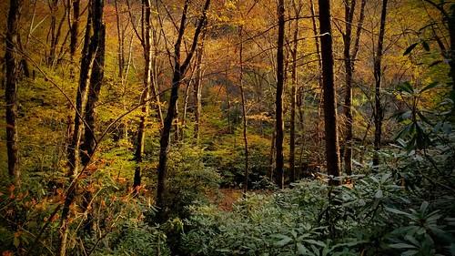 woods sunset nature trees trail fallcolors autumn alone peaceful